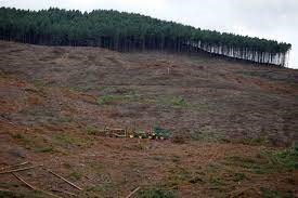 Webinar: The Impacts of Industrial Timber Plantations on Environmental and Social Justice